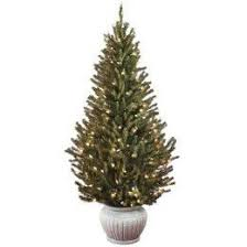 live christmas trees living christmas trees treehugger