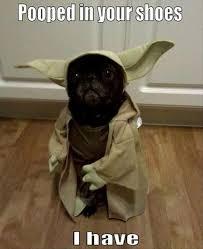 Sad Pug Meme - 26 best pug memes images on pinterest doggies ha ha and funny animal