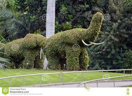elephant shaped topiary green trees in ornamental garden stock
