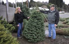 christmas tree prices christmas tree prices expected to rise amid shortages oregon