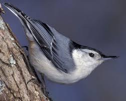 Backyard Treasures Dothan Al 40 Best Backyard Birds Images On Pinterest Backyard Birds
