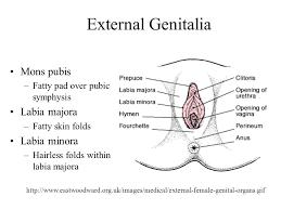 hairless pubis the pelvic cavity bony pelvis reproductive organs ppt video