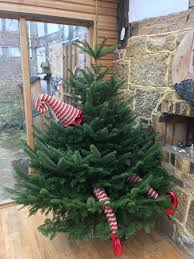 Christmas Tree Buy Online - christmas decorations for sale buy online at send me a christmas