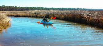 Alabama wildlife tours images Wildnative tours trust the native in you jpg