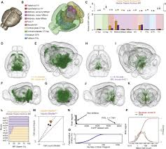 Anatomy Of Rat Brain A Whole Brain Atlas Of Inputs To Serotonergic Neurons Of The