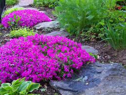 Phlox Flower Creeping Phlox Flower Beds And To Grow On Pinterest Idolza