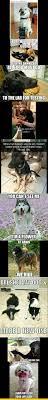 Grumpy Dog Meme - grumpy dog meme fresh best 25 cat and dog memes ideas on pinterest