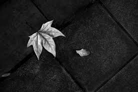 Download Black And White Floor by Free Stock Photo Of Black And White Fallen Leaves Floor