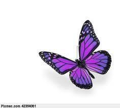 25 best purple black butterfly and roses tattoos images on