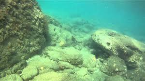 snorkeling at crishi beach on nevis island youtube
