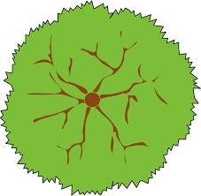 clipart tree 05