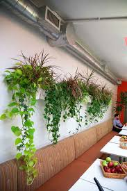 plants for office office plants greenery nyc