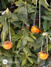 orange birdseed ornaments citrus bird feeders