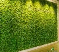 moss wall aquarium green house design lush curtain of greenery