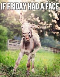 Funny Donkey Memes - we accept pets on twitter if friday had a face donkey funny