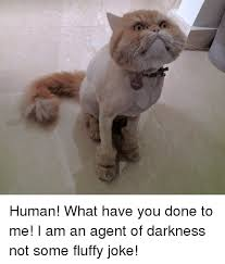 What Have You Done Meme - human what have you done to me i am an agent of darkness not some