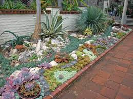 succulent rock garden designs best idea garden