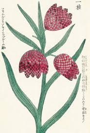 Japanese Flower Artwork - japanese floral prints kew botanical prints
