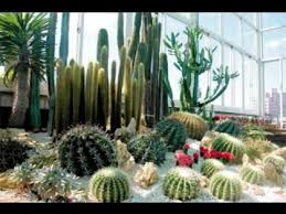 cactus garden designs cactus garden design ideas pictures youtube