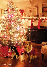 merry christmas 2 cats and chloe