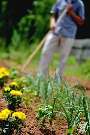 the benefits of mulch and compost in the vegetable garden