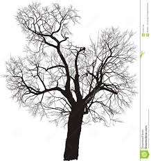 mulberry tree vector royalty free stock image image 15487146