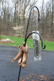 Squirrel Nuts Meme - hilarious squirrel nuts meme photo quotesbae