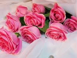 Pink Roses Wallpaper by Pink Rose Hd Wallpapers Hd Wallpapers Pinterest Pink Roses