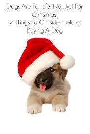 57 best dog ideas images on pinterest dog mom pet treats and