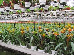 tropical foliage plants your worst enemies greenhouse product news