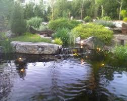 backyard pond wild ones u2013 st louis chapter