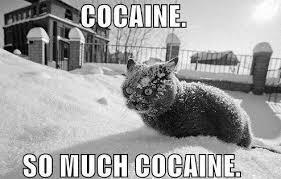 Coke Bear Meme - coke bear by sirwadewilson meme center