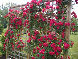 my garden trellis make your garden beautiful
