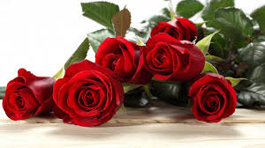 roses for valentines day celebrate with 14 s day desktop wallpapers brand