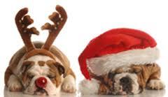 christmas sayings merry christmas greetings