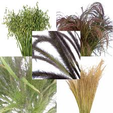 ornamental grass medley fresh cut greenery
