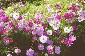 free photo flower garden autumn course free image on pixabay