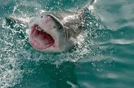 how did shark attack hysteria originate in the us