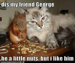 Crazy Friends Meme - dis my friend george lolcats lol cat memes funny cats