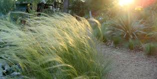 picture this photo contest ornamental grasses east side patch