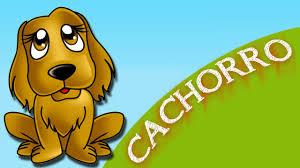 Amado Planeta Animal - Cachorro - YouTube &WU83