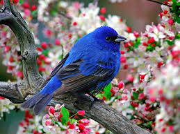 Dave Ramsey Talkers Magazine U2013 by 68 Best Beautiful Birds U0026 Butterflies Images On Pinterest