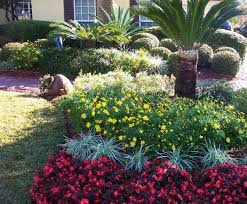 florida landscaping plants outdoor goods