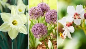 How To Grow A Bulb In A Vase How To Plant Tulips And Daffodils