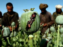 Flag Of The Taliban Taliban Control Of Heroin Drug Production Trafficking In