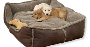 Ll Bean Dog Bed Dog Beds Pets At Home U2013 Restate Co