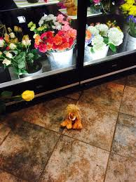 waukesha floral milwaukee lion spotted at waukesha floral