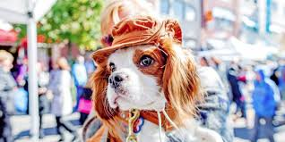 18th annual halloween pet parade and fall festival arts in ohio