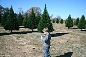 day trip cut your own christmas tree at dewberry farm love