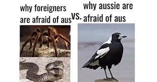 Australian Meme - literally just 100 fucking hilarious australian memes